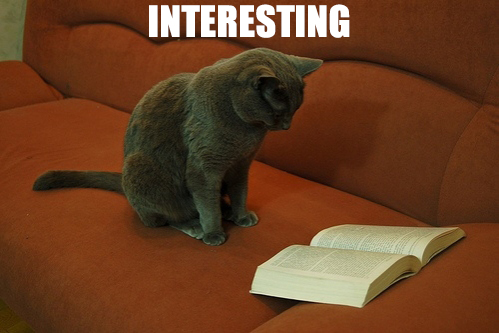 Cat-Reading-Interesting